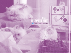 The Fashion Kitty
