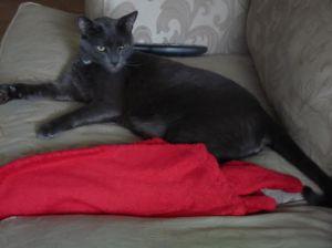 Lou the Shop Cat 2