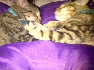 Garfield and Leo