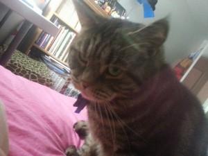 Gizmo Scardy Cat