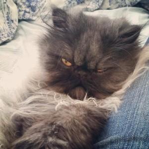 Mr. Puss