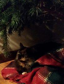 Christmas Hazel