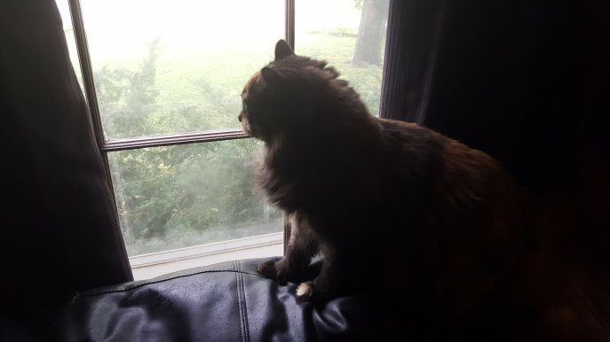 hazel-looks-out-window-1
